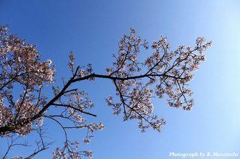 2011_04200007.jpg