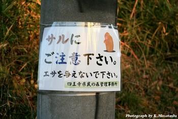 2010_12040059.jpg